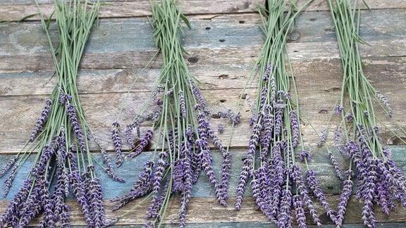 Lavendel zu Sträußen geteilt, vorbereitet fürs Trocknen