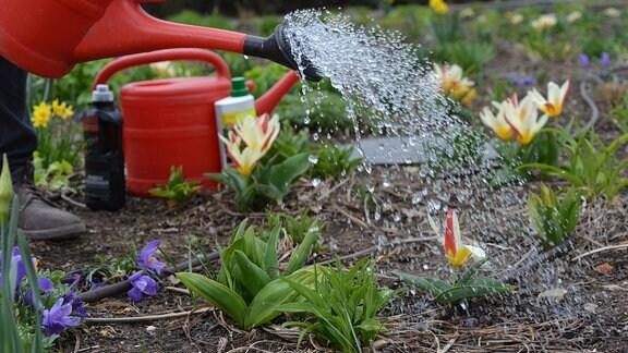 Mit einer Gießkanne werden Pflanzen gegossen