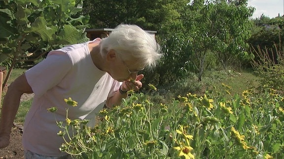 Besucherin im Blindengarten Radeberg riecht an blühenden Schokoladenblumen