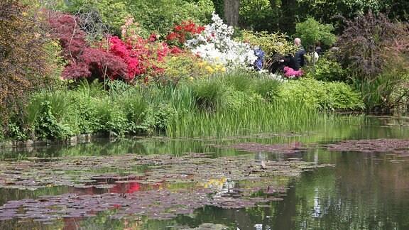 Teich mit Seerosen und Uferbepflanzung.