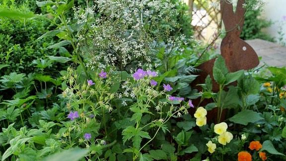 Geranium 'Mayflower' steht im lichten Schatten in einem Beet mit dem Purpur- Wiesenkerbel.