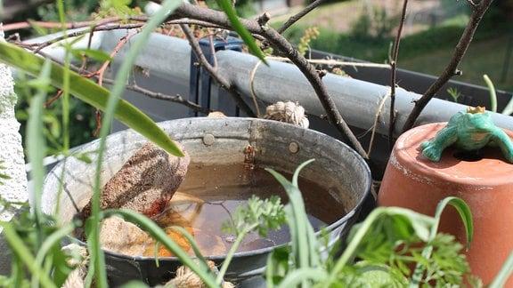 Insektentränke in Zinkwanne