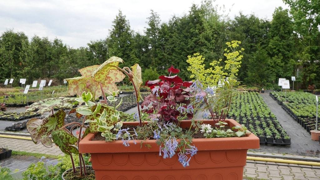Atemberaubend Pflanzen für den schattigen Balkon | MDR.DE @RA_18