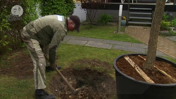Der MDR Gartenmeister Jürgen Meister hebt mit Hilfe einer Spitzhacke ein Loch in einem Stück Rasen für einen Baum aus, der in einem Pflanzgefäß daneben steht