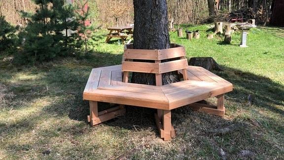 Eine Baumbank um einen Baumstamm.