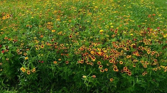 In gelb bis rot blühende Blumen.