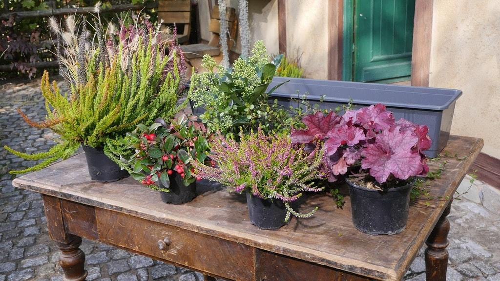 Beliebt Bevorzugt Herbst und Winter auf Balkon und Terrasse | MDR.DE @IX_76