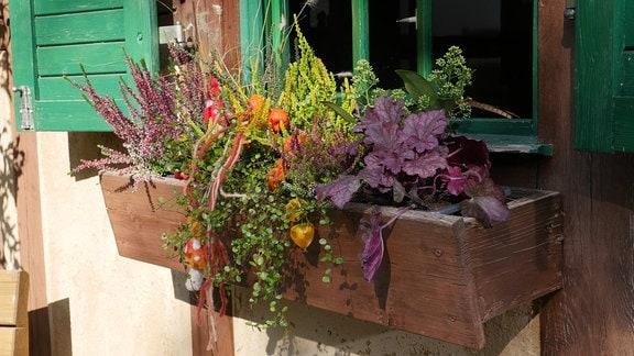 Blumenkasten für Herbst und Winter.