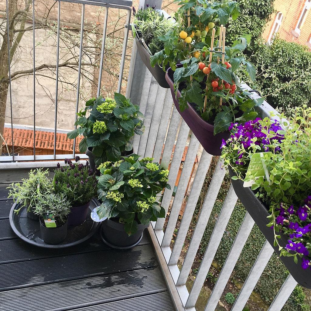 Wohlfuhloase Balkon Gestalten Pflegen Geniessen Mdr De