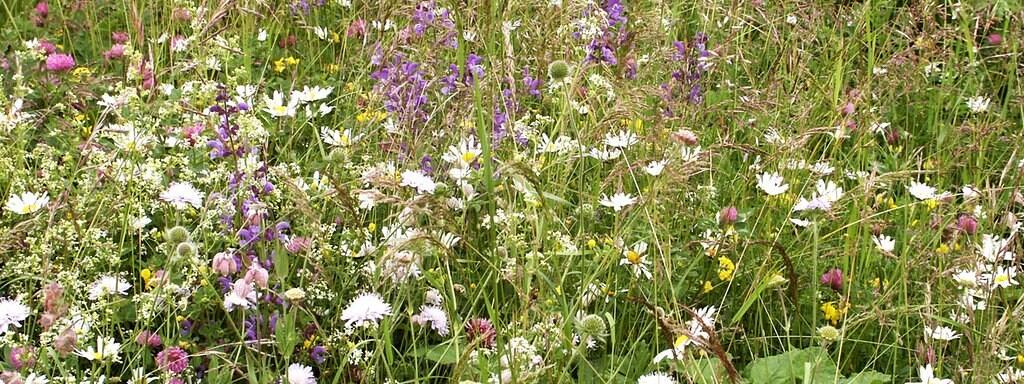 Blumenwiese Und Blumensaum So Schon Sind Wildpflanzen Mdr De