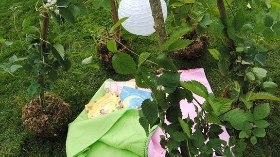 Bücher und Decken in einem Brombeer-Tipi