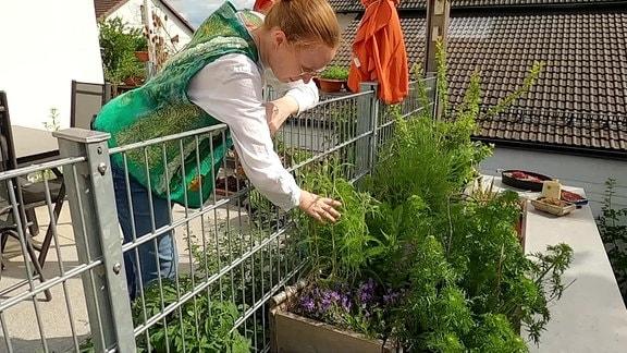 Gärtnerin Dorothea Lang kümmert sich um einen Blumenk auf dem Dachgarten.