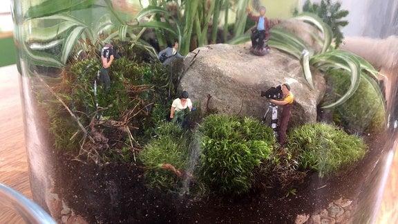 In einem Glas wurde eine Landschaft mit Pflanzen gestaltet. Kleine Modell-Figuren stehen zwischen Steinen und Pflanzen.