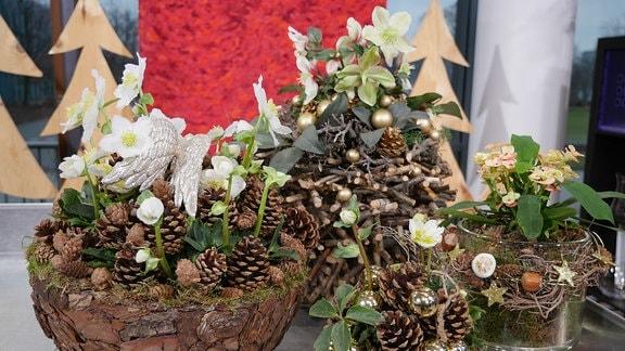 Weihnachtsfloristik in verschiedenen Gefäßen mit Christrosen und Zapfen.