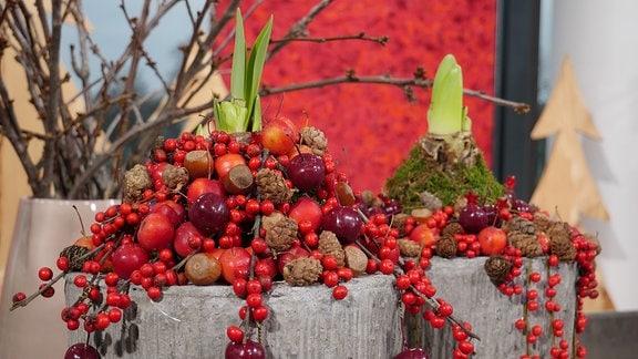 Weihnachtliche Dekoration mit Amaryllis, gewachsten Zieräpfeln und Ilex