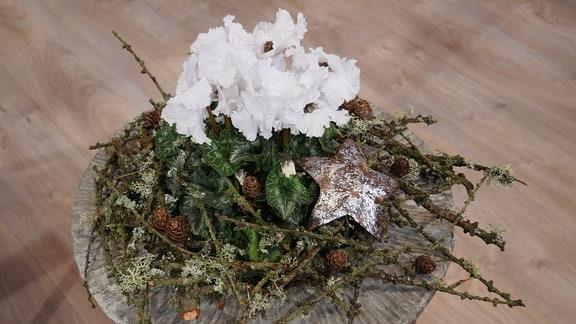Weihnachtliche Dekoration mit Alpenveilchen und bemoosten Apfelzweigen