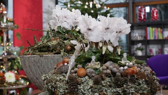 Alpenveilchen mit Flechtzweigen, Haselnüssen und weihnachtlichen Dekoelementen
