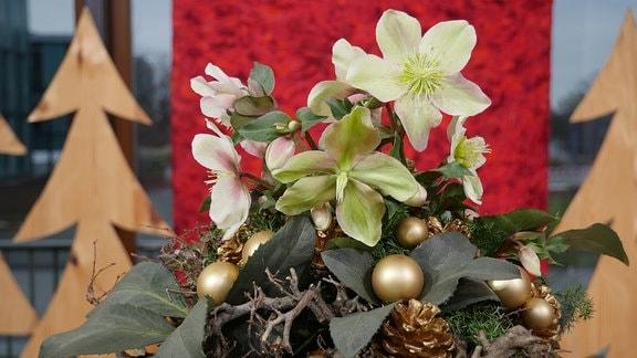 Christrose in einem Gestell aus Ästen und mit vergoldeten Kugeln und vergoldeten Zapfen.