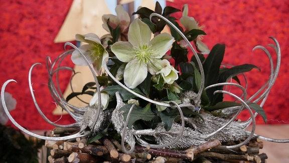 Christrose in einem Gestell aus Ästen und mit versilberten Vogelfrüchten.