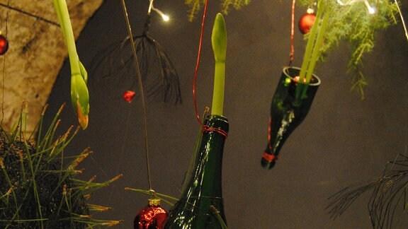 Hängende, grüne Glasflaschen mit Zwiebelblumen darin