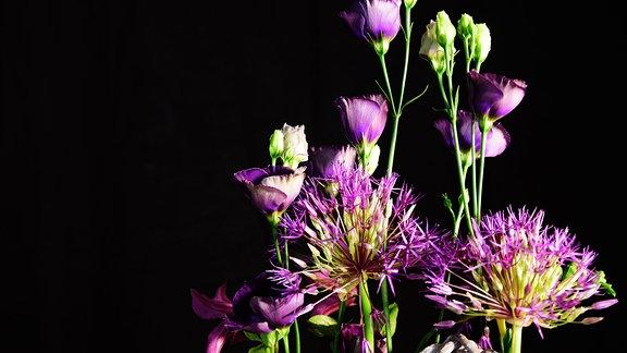 Lila und weiße Blumen