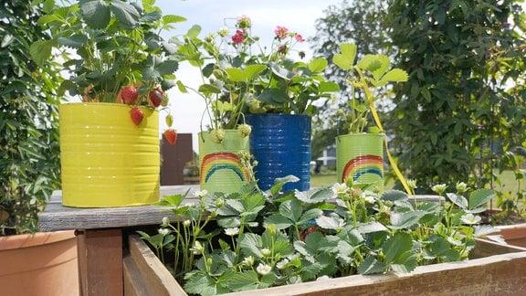 Bemalte Dosen und Schublade wurden mit Erdbeeren bepflanzt
