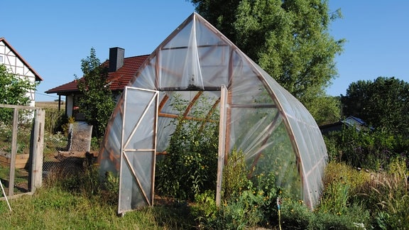 Folien-Gewächshaus mit Tomatenpflanzen