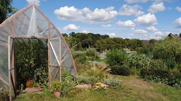 Gewächshaus mit Tomaten in der Permakultur-Gärtnerei Wildwuchs in Fernbreitenbach
