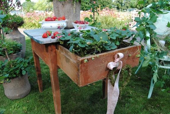 Gestaltungsideen: Beeren im Garten mal anders in Szene setzen   MDR.DE