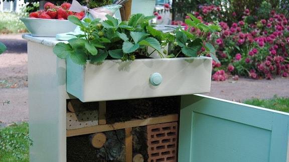Ein Nachtschränkchen mit einer ausgezogenen Schublade, in die Erdbeerpflanzen gesetzt wurden, und einer geöffneten Schranktür darunter, hinter der Nisthilfen für Wildbienen als Insektenhotel hergerichtet wurden