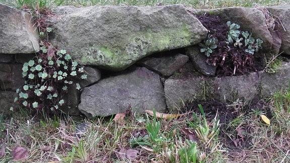 Trockenmauer in einem Garten