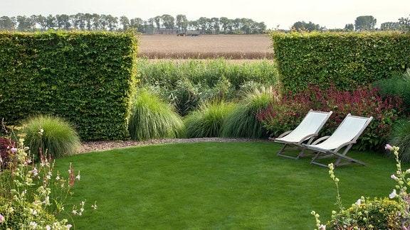 Eine Hecke ist unterbrochen und gibt den Blick auf ein Feld frei.