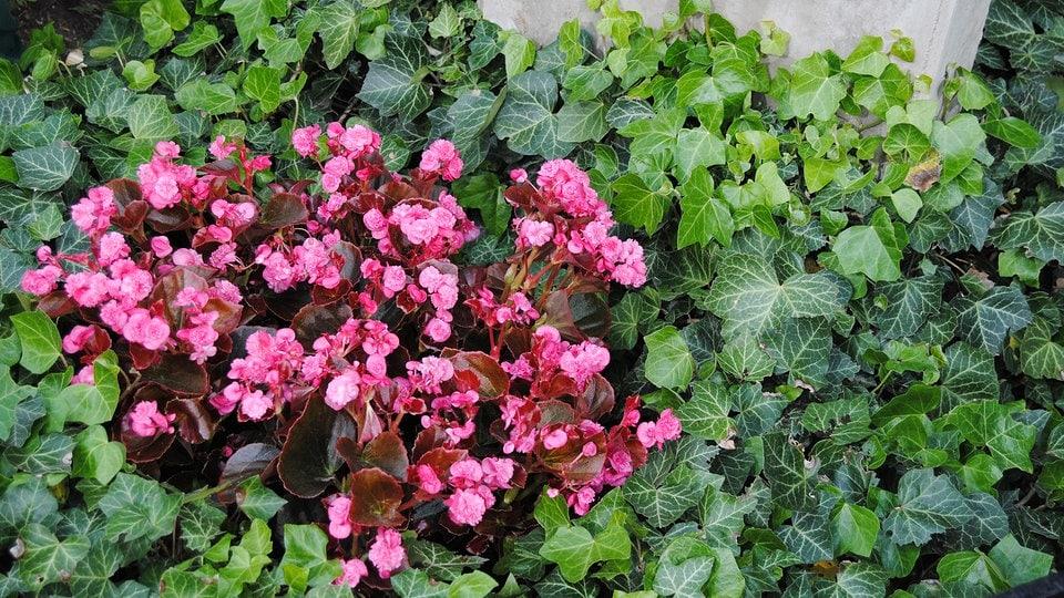 exotische pflanzen fur den garten winterhart, gräber mit pflanzen gestalten | mdr.de, Design ideen