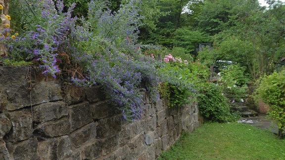 Eine Steinmauer in einem Garten, auf der Mauer wachsen viele Pflanzen.