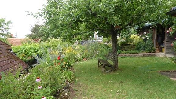 Auf einer Gartenwiese steht eine Holzbank unter einem Baum.