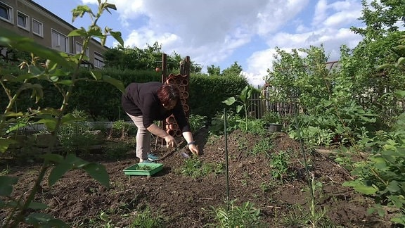 Eine Frau arbeitet mit einer kleinen Schaufel an einem niedrigen Hügel mit Pflanzen darauf in einem Kleingarten