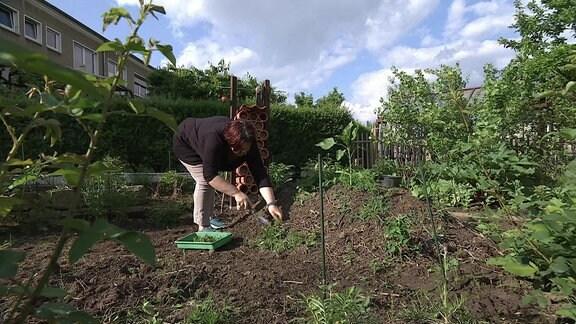 Eine Frau Arbeitet Mit Einer Kleinen Schaufel An Einem Niedrigen Hügel Mit  Pflanzen Darauf In Einem