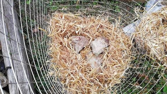 In einem Turm aus einer Estrichmatte liegt eine Schicht Stroh mit drei Steinen.