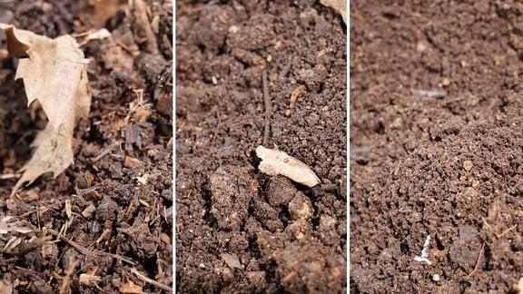 Kompostvarianten nach einem, nach zwei und nach drei Jahren