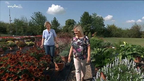 MDR Garten - Insektenfreundliche Sortimente