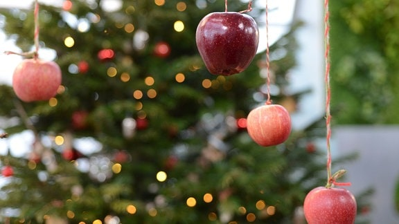 Äpfel hängen an einem Strick von der Decke herunter, im Hintergrund steht ein Weihnachtsbaum