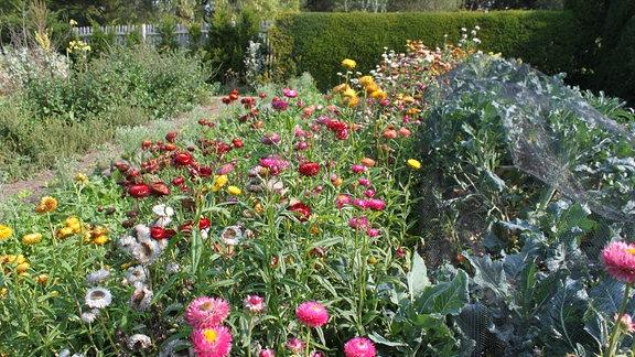 Strauß Trockenblumen