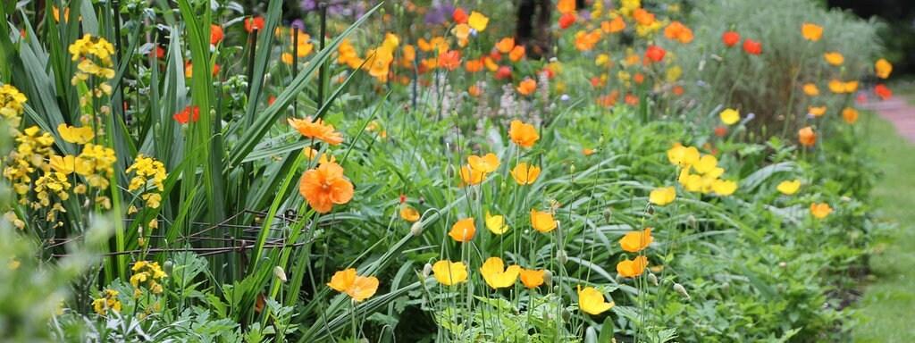Mehrere Verschiedene Pflanzen, Die Gelbe, Orangefarbene Und Rote Blüten  Tragen, In Einem Staudenbeet