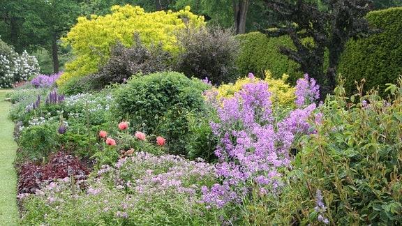 Mehrere verschiedene Sträucher und blühende Pflanzen, die lilafarbene und hellrote Blüten tragen, in einem Staudenbeet an einer Rasenfläche mit einer Thuja-Hecke im Hintergrund