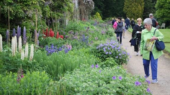 Besucherinnen und Besucher in einem englischen Garten laufen an einem langgezogenen Stauden-Beet mit blühenden Lupinen und anderen Pflanzen entlang, die blaue und lilafarbene Blüten tragen