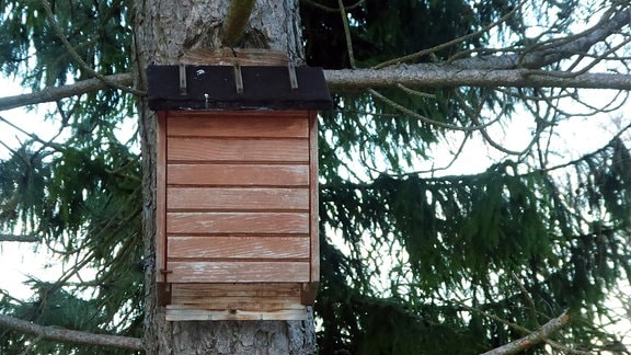 Ein Fledermauskasten aus Holz an einem Baum.