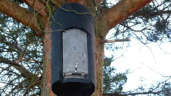 Ein Fledermauskasten aus Holzbeton an einem Baum.