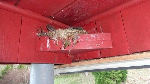 Ein Vogelbrett unter einem Hausvordach.