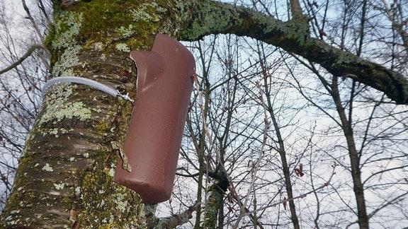 Eine Baumläuferhöhle, die am Stamm eines Obstbaums befestigt ist.