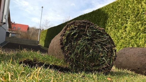 Zwei Bahnen aufgerollten Fertigrasens liegen in einem Garten mit einer dichten, grünen Hecke im Hintergrund auf einer Rasenfläche